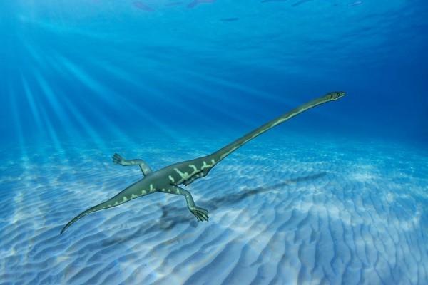 Este antiguo reptil (con un cuello más largo que su cuerpo) era acuático y no terrestre